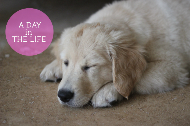 a day in the life of raising a puppy - My SoCal'd Life