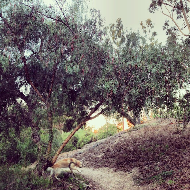 Balboa-Park-trails-san-diego