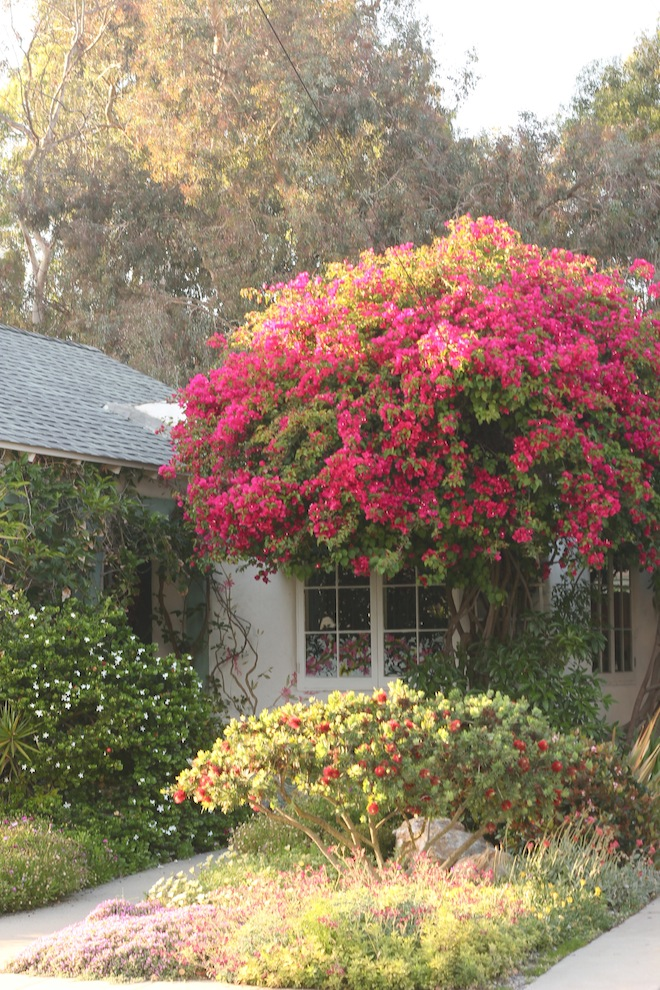 bougainvillea // My SoCal'd Life, a lifestyle blog