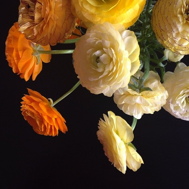 Ranunculus // My SoCal'd Life, a lifestyle blog
