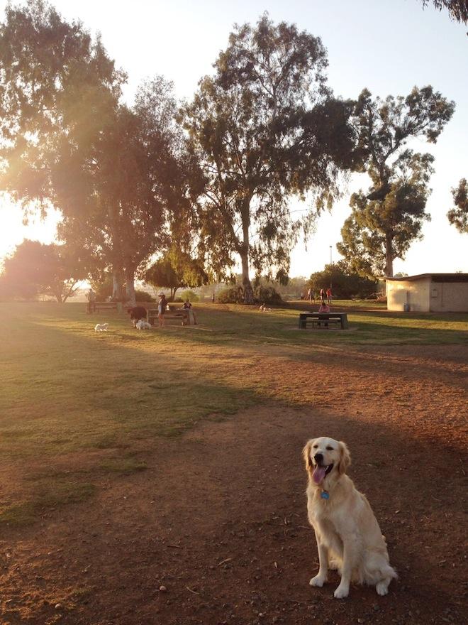 grape-street-dog-park