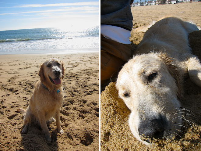 newport-beach-dog-friendly