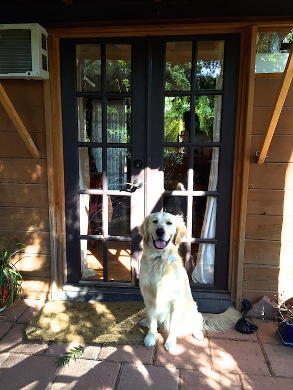 dog-friendly-accommodation-ojai