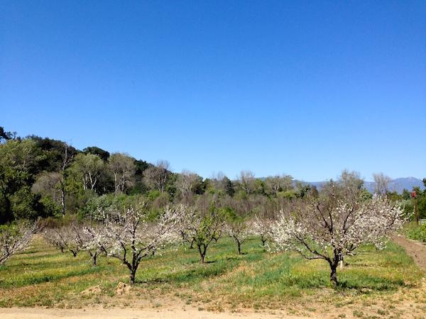 old-creek-winery-ventura-3