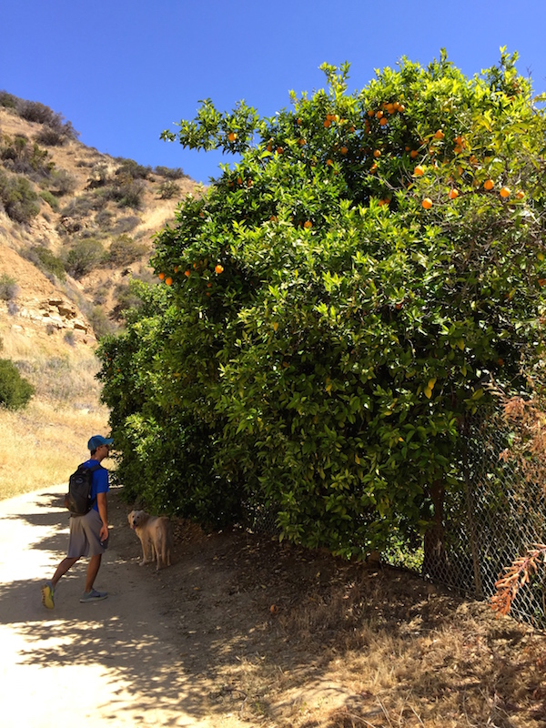 Hiking in Ojai // My SoCal'd Life's guid to Ojai