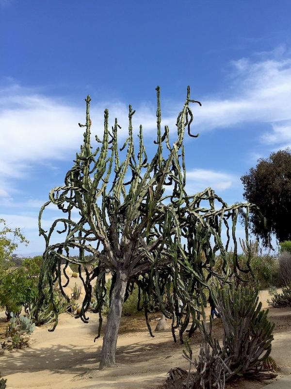 Balboa Park Cactus Garden // My SoCal'd Life, a lifestyle blog