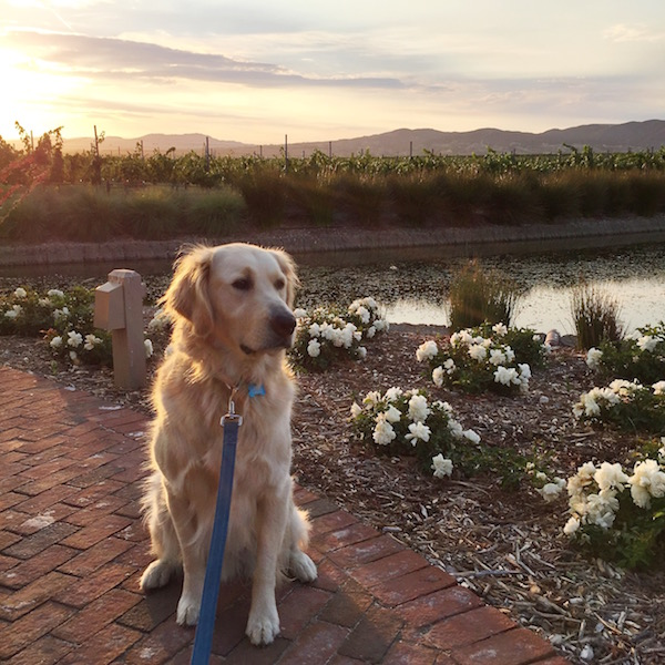 dog-friendly-temecula