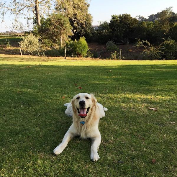 san-diego-dog-parks