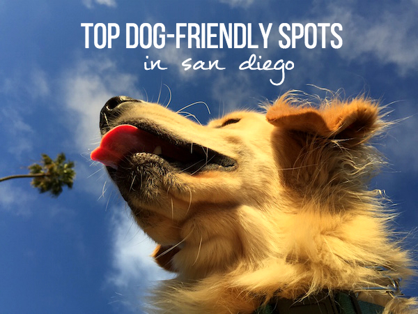 Top Dog-Friendly Spots in San Diego // My SoCal'd Life